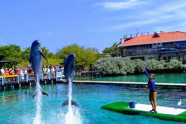 Oceanario de cartagena Islas del Rosario